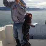 Mark Hollinger gafs a Lingcod on Pacific Pond in March